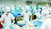 Cá tra Việt Nam lép vế trên thị trường