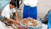 Hải sản sống ở tầng nổi tại khu vực biển miền Trung an toàn để làm thực phẩm