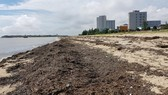 Cá chết lác đác cùng rác tấp vào hàng chục km bờ biển Quảng Bình