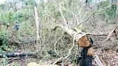 3 bảo vệ rừng ở Đắk Nông bị bắn chết