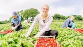Châu Âu đẩy mạnh xuất khẩu nông sản sang thị trường mới nổi