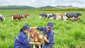 Việt Nam sản xuất thành công sản phẩm organic đạt tiêu chuẩn Châu Âu