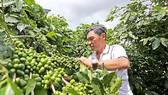 Coffee export rebounds in 2016