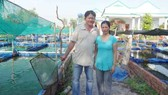 Làm giàu từ nuôi cá cảnh và mai ghép