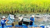 Ca Mau to host Shrimp Festival