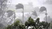 Siêu bão Debbie đổ bộ vào Australia