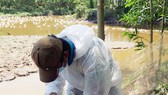Xuất hiện cúm H5N6 trên đàn vịt ở Thừa Thiên - Huế