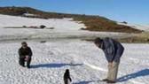 Chim cánh cụt chết – những nhà môi trường nổi giận