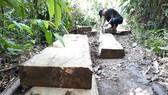 Đột nhập bãi tập kết gỗ lậu ở xã biên giới