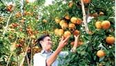 Xây dựng thương hiệu nông sản Việt Nam