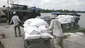 """Lúa """"sốt"""" theo hợp đồng xuất khẩu: Bước ngoặt tạo nền tảng vững chắc cho hạt gạo trên thương trường"""