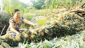 Hậu Giang tìm cách xây dựng chuỗi giá trị nông sản