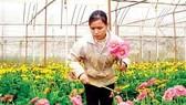 Nhiều đơn vị được tiếp cận nguồn vốn để sản xuất nông nghiệp công nghệ cao