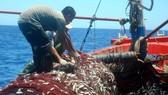 Nhiều tàu cá ở xã Bảo Ninh trúng lớn luồng cá trong 15 ngày đánh bắt.