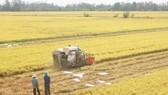 Sản xuất lúa gạo, thế mạnh của vùng Đồng Tháp Mười