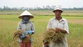 Nhiều diện tích đất lúa kém hiệu quả, bị ảnh hưởng bởi hạn mặn, thiếu nước... sẽ tiếp tục được chuyển đổi sang các loại cây khác cho hiệu quả cao hơn
