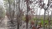 Hiện trường xảy ra cháy ở Khu bảo tồn sinh cảnh Phú Mỹ