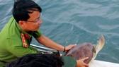 Thả 12 cá thể vích quý hiếm về vùng biển Phú Quốc