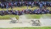Hàng chục ngàn người xem đua bò Bảy Núi