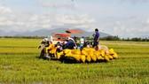 Lũ năm 2018 làm mất trắng khoảng 2.000ha lúa của nông dân ĐBSC