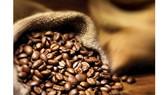 Đôi nét về thị trường cà phê Morocco
