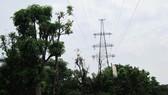 Thu hồi đất các công trình lưới điện cao áp không còn khai thác bán đấu giá