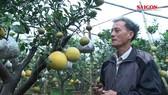Ghép cây cảnh với 10 loại quả, nông dân Hà Nội thu trăm triệu dịp Tết