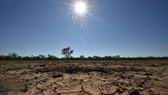 Nông dân Australia chống chọi với hạn hán