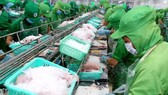 Vietnam's frozen tra fish fillets will be subject to antidumping duties of 2.39 – 7.74 USD per kilogramme from the United States. (Photo: VNA)