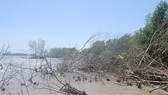 Sạt lở bờ biển phía Tây của tỉnh Cà Mau làm đất rừng phòng hộ ngày càng mất dần