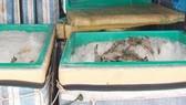 Liên tiếp phát hiện xe khách vận chuyển tôm bơm tạp chất