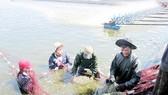 Phải thận trọng khi cho người nước ngoài thuê mặt nước biển
