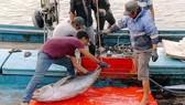 Việt Nam hành động để loại bỏ khai thác hải sản bất hợp pháp