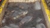 Bắt quả tang cơ sở dùng chất tẩy trắng ngâm hàng trăm ký nội tạng bò