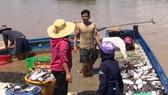 Hơn 388 tấn cá nuôi chết trắng trên hồ Trị An