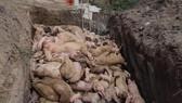 Đồng Nai xin hỗ trợ 800 tỷ đồng phòng chống dịch tả heo châu Phi