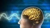 Patient suffers brain damage due to ineffective endocarditis