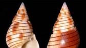 Vietnamese woman dies after eating bizarre sea snail