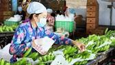 An export banana farm in Tay Ninh province (Photo: VNA)