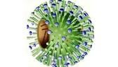 Virus cúm B. Ảnh minh họa