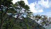 Hội thảo khu vĐến năm 2020, cấp chứng chỉ quản lý rừng bền vững đối với 500.000ha rừngực quản lý bảo vệ rừng
