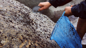 Chênh vênh trên đá khai thác rau mứt biển