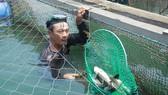 Đề nghị hỗ trợ 9,2 tỷ đồng chuyển đổi nghề nghiệp cho người nuôi cá bớp bị chết cảng Dung Quất