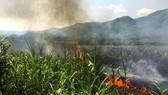 Quảng Ngãi: 18 hộ dân thiệt hại cháy ruộng mía