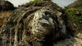 Vận chuyển san hô hóa thạch niên đại 5.000 - 6.000 năm tuổi lên gần Hang Câu