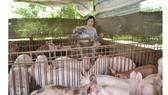 Heo nuôi tại một hộ chăn nuôi ở tỉnh Đồng Nai đến kỳ xuất chuồng.