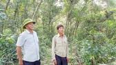 Một góc rừng dẻ Quảng Lưu