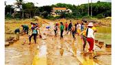 Miền Trung dồn lực khắc phục hậu quả lũ lụt