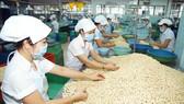 """Việt Nam và ngôi vị """"Vua hạt điều"""" thế giới - Bài 2: Cần chiến lược tăng giá trị hạt điều"""