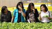 Đưa giám đốc trẻ thực tập nông nghiệp tại Nhật Bản